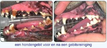 How Often Should I Get My Cat S Teeth Cleaned